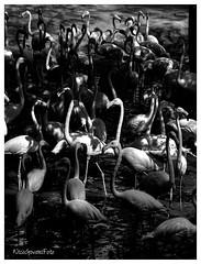 explore (Nico Govoni) Tags: nature explore bw black white contrast anon eos 6d photo tone