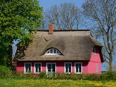 Das Haus auf der Insel (Harald52) Tags: putgarten insel rgen mecklenburgvorpommern gebude dach reetdachhaus