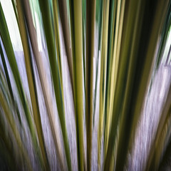Bamboozled (paddle_jim) Tags: swipe bamboo groundsforsculpture hamilton nj