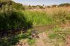 160827_PMN Refugio das Aves_014 (Luiz Henrique Foto) Tags: luizhenriquefoto luizhenriquephoto autoral bragança bragançapaulista bragançapaulistasp brook coletivosocioambiental coletivosocioambientaldebragançapaulista creek desenhandoaluz eco ecologia estadodesãopaulo fotoexterna fotografiaautoral fotografiadenatureza fotojornalismo luizhenriquefotografia natureza ong organizaçãonãogovernamental pnmrefúgiodasaves parque parquenaturalmunicipalrefúgiodasaves riacho ribeirão rivulet sp stream sãopaulo terceirosetor unidadedeconservação wwwluizhenriquefotocombr ©luizhenriquerocharodrigues áreaverde brasil br outputphoto