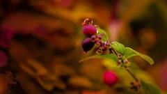 autumn 2 (Yasmine Hens) Tags: autumn colors season hensyasmine namur belgium wallonie europa aaa belgi belgia belgien  belgique blgica   belgie  belgio    bel be