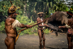 Pig Slaughtering (tehhanlin) Tags: indonesia papua westpapua irianjaya wamena jayapura nusantara sony a7r2 a7rm2 humaninterest tribe thedanis sukudani portrait pigfeast earthoven ngc