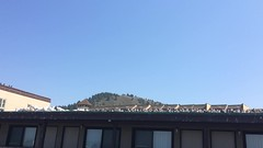 New take on green roofs: fill them with seagulls! (Pacifica, CA, USA) (steepingyogi) Tags: california greenroof seaside seagulls