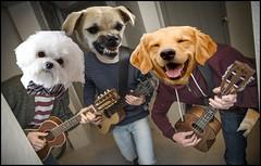 UkeDog1 (FolsomNatural) Tags: ukulele trio dogs humor spoof