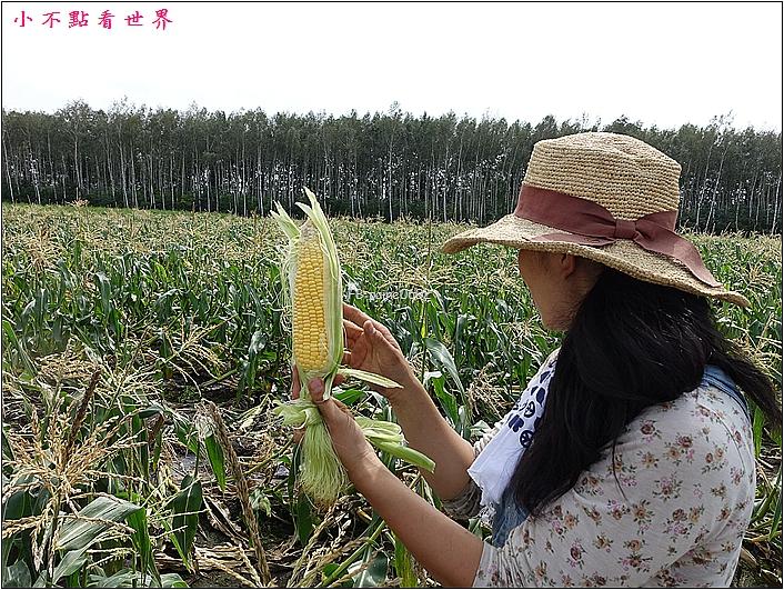 川野農場 DIY採玉米 (14).JPG