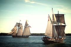Tall Ships - Brockville, ON (Derek Mellon) Tags: ship tallship prideofbaltimore tallships sailing brockville
