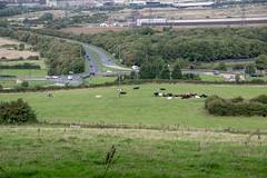 DSC_7565 (Powershift2012) Tags: pigbank flattslane wilton estonhills cars hills tunnel trees nab pylon