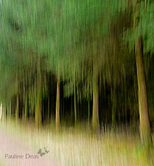 Forest (Pauline Deas) Tags: panning technique abstract woods woodland forest walk callander trossachs outdoors scotland