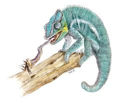 Chameleon (Watercolor) (jeanchristophegueguen) Tags: chameleon commonchameleon camlon biodiversityandevolutionoftheanimalworldabriefhistoryofanimals biodiversityevolutionoftheanimalworldabriefhistoryofanimals biodiversitetevolutiondumondeanimalunebrvehistoiredesanimaux biodiversitevolutiondumondeanimalunebrvehistoiredesanimaux lescahiersdelabiodiversit handbook book draw drawing paint painting pencil color watercolor dessin peinture crayon couleur aquarelle illustration biodiversit biodiversty animals nature naturaliste naturalist jeanchristophegueguen guc 2016