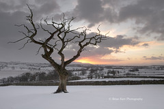 Sunrise With The Tree (.Brian Kerr Photography.) Tags: winter snow cold tree sunrise landscape thepowerofnow
