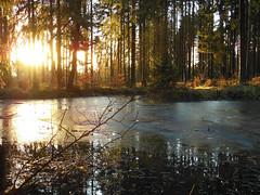 DSCN0594 es wird ruhig im Wald-It is quiet in the forest (baerli08ww) Tags: sunset forest germany deutschland nikon sonnenuntergang wald rheinlandpfalz westerwald rememberthatmomentlevel4 rememberthatmomentlevel1 rememberthatmomentlevel2 rememberthatmomentlevel3 nikoncoolpixs9300 rememberthatmomentlevel5