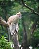 Singapore Zoo-257 (Jon Durman) Tags: animals zoo nikon wildlife april 2012 singaporezoo nikond700 nikon28300mm