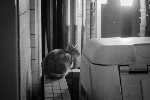 Today's Cat@2013-02-08