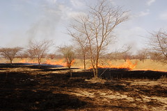 Burning the Forest - Sudan (UNEP Disasters & Conflicts) Tags: africa sudan training environment climatechange drought conflict disaster peace development agriculture fire deforestation unep unenvironment