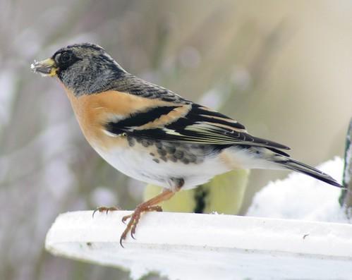 Winter bird feeders 10