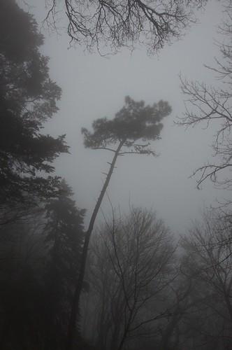 Alone ©  Still ePsiLoN