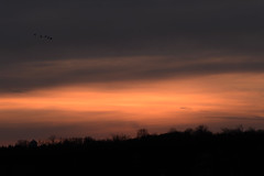 5 Ducks_42598.jpg (Mully410 * Images) Tags: sunset bird birds landscape watertower birding ducks birdsinflight fowl waterfowl birdwatching birder tcaap ahats burdr tcaapwva