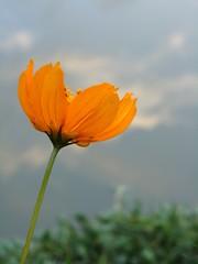 (louicm) Tags: orange lake flower verde green nature lago amazing natural natureza laranja flor lindo paty diferente belo