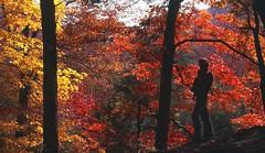 Sugar Creek  .  .  .  Explored! (ericrstoner) Tags: autumn fall fallcolors indiana autumncolors sugarcreek kodachrome devilsbackbone nikkormat shadesstatepark montgomerycounty thenatureconservancy nikkormatft pinehillsnaturepreserve deermill