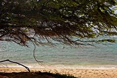 Beyond the Shore (Explored 3/20/2013) (jcc55883) Tags: ocean hawaii sand nikon oahu pacificocean shore yabbadabbadoo d40 kaalawai diamondheadbeachpark kaalawaibeach nikond40 diamondheadroad kuileicliffs