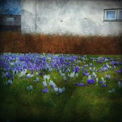 crocus (Van der fun!) Tags: texture monochrome square background quadratisch textur photoshelter