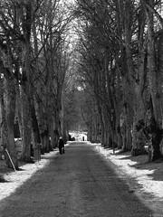 Lady in black (Tobbe_N) Tags: trees winter people blackandwhite bw snow monochrome cemetery lady sweden candid olympus human walkway grayscale avenue greyscale olympusxz1 olympusxz