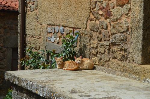 Taking a morning nap