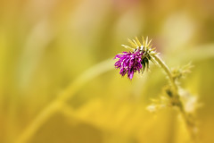 Blmsche (michel1276) Tags: blume blte flower flowers earthnaturelife