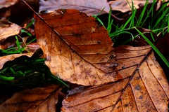 Untitled (Kai.macfarlane) Tags: leaf damp nature natural canon 700d photography