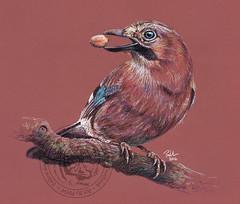 Walter T. Jay (Paul-M-W) Tags: jay bird corvid nature natural drawing sketch art pastel pastelpencil animal creature