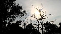La diritta via era smarrita (Ferruccio Zanone) Tags: dante alighieri divina commedia biella candelo tramonto baraggia savana riserva naturale alberi alberi spogli