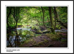 The River Fowey at Draynes Wood (Chalky666) Tags: tree trees wood woodland forest foliage leaves painterly art