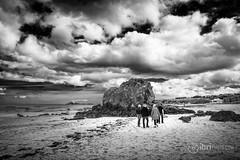 North Berwick - Bass Rock - 04.jpg (ibriphotos) Tags: blackandwhite northberwick gannet beach bass eastlothian seabird break friends polariser riverforth polarizer firthofforth daytrip weekend caravan