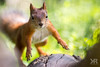 Cage race (rysykas) Tags: orav squirrel
