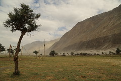 A wonder called Nubra Valley. (Rahul Gaywala) Tags: amazing dasert desert dunes hunder julley leh ladakh incredible india himalaya pure bliss blessed kashmir jk himachal mountain indus roadtrip wander travel blue sky clouds siachin glacier ice snow cloud adventure himalayanlandscape karakoram nubra sand