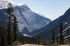 Canadian Rockies (profstoff) Tags: 2016 icefieldsparkway rockies canada