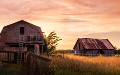 quiet pride (JimfromCanada) Tags: barn old rustic farm antique vintage sunny sunset field broken farmland land crop crops used aged age roof summer autumn fall caistorcentre ontario canada
