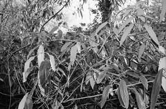 Engelsesteenweg, Doel, OVL (Jickatrap) Tags: pentax pentaxmz50 35mm  analog film filmphotography  bwfilm  ilforddelta delta400 blackandwhite       photographersontumblr  doel