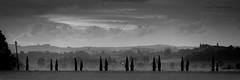 Panoramic sunset view (B/W) (PhotographbyBram) Tags: panorama panoramic nature italy tuscany fields outdoor bw blackwhite trees landscape travel