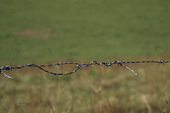 Fence (wildrosetn39) Tags: 112015 bokeh green grass wire barbwire fence