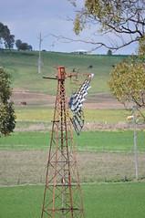 Derelict Intercolonial Boring Company (IBC) New Simplex (sarracenia.flava) Tags: ibc intercolonial boring company new simplex windmill rare warwick queensland australia derelict