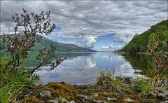 Beautiful Loch Ness (McRusty) Tags: loch ness heather flowers still deep water white fluffy clouds great glen albyn blue sky reflection reflected highland scotland beautiful outdoor natural beauty