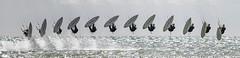 Kitesurfing composite (BuzzleCup) Tags: kitesurfing kitesurf kitesurfer isleofwight iow iw wight westwight comptonbay
