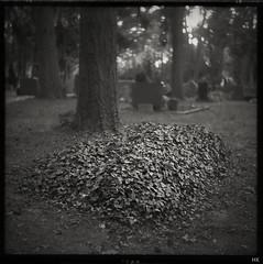 Pall of Ivy (*altglas*) Tags: grave graveyard friedhof grab efeu ivy mediumformat mittelformat 6x6 120 film analog expired expiredfilm orwo np20 bw monochrome zeiss superikonta 53316 rodinal