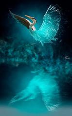 Le lacrime sono lo sciogliersi del ghiaccio dellanima... (LightRapsody) Tags: airone ghiaccio creativit creativity photoshop