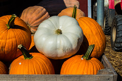 Standout Amoung Orange Pumpkins (EtheFire) Tags: elijay georgia north fall autumn mountains red apple barn pumpkins