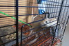 food defender (Annie-Sue Jyelra) Tags: gerbil cage food bowl sit