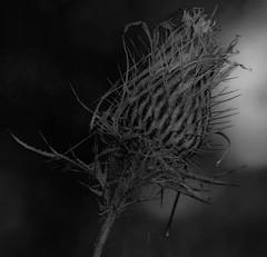 Black & White (vernonbone) Tags: 105mm 2016 autumn d3200 eastpoint eastpointpark lens ontario september closeup colors landscape marco105mmsigma nikon outside stuff