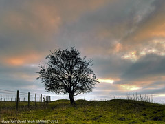 Lonely Tree - Shepway Cross (Daveyboy_75) Tags: trees sunset tree fence afternoon cross olympus line lonely friday hdr lonelytree earlyevening fenceline afternoonlight shepway lympne e450 westhythe fencefriday shepwaycross