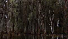 Bog (John M Anderson) Tags: tree green wet trash moss oak florida live low dump spot swamp depression cypress lichen suwanee bog